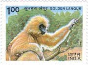 Indian Wild Life - Golden Langur