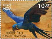 Commemorative Stamp on Hyacinth Macaw