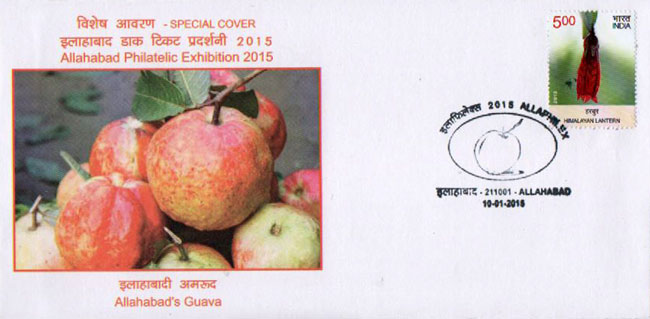 Special Cover on Gauva of Allahabad