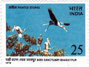 Bird Sanctuary Bharatpur - Painted Storks