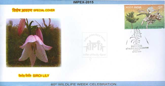 Special Cover on Siroi Lily