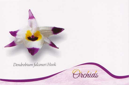 Picture Postcards on Orchids