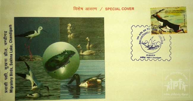 Special Cover on Migratory Bird, Sukhna Lake, Chandigarh